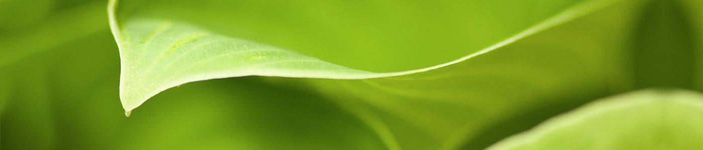 Plimon - Quality - Environment